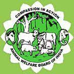 Animal Rescue Kerala | Animal welfare board, Street dogs, Dog feeder