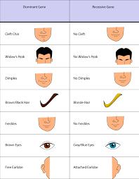 Eye Gene Chart Punnett Square Dominant And Recessive Traits Science