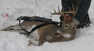 persuasive essay deer hunting persuasive essay deer hunting