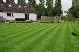 gardening don t be green over grass care