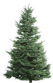 Types Of Fir Christmas Trees
