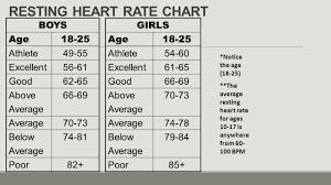 23 Curious Average Heart Beat Per Minute Chart
