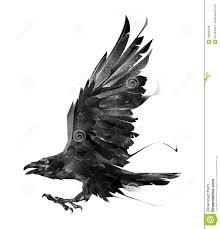 эскиз ворона летящей птицы на белом взгляде со стороны предпосылки
