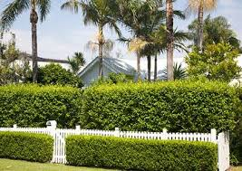 Image result for privacy hedge ideas
