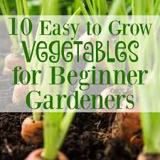 beginner gardening. 10 Easy To Grow Vegetables For Beginner Gardeners - Graceful Little Honey Bee Gardening