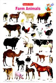 Farm Animals Pictures With Names Wallpapers Warrior