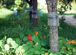 ловушки для+садовых вредителей+фото