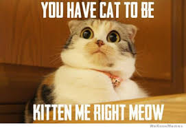 You Have Cat To Be Kitten Me Right Meow | WeKnowMemes via Relatably.com