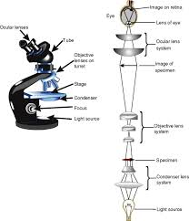 Types Of Microscopes Chart Optical Microscope An Overview Sciencedirect Topics