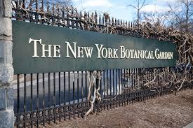 Nybg Landscape Design Certificate New York Botanical Garden Around The Block Blog Bronx