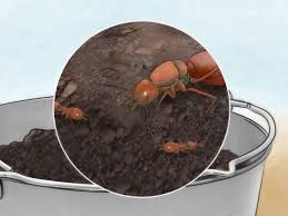 Little Black Ants In Kitchen How To Get Rid Of Tiny Ants With Pictures Wikihow