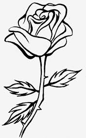 Pictures simple rose line drawing drawings art gallery line drawing of a rose free download clip