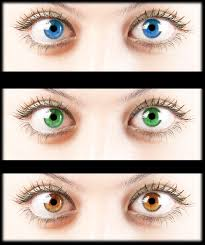 Eye Color Recessive Dominant Chart What Are Dominant And Recessive