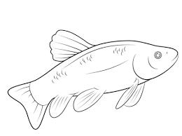 Disegno Di Pesce Da Colorare Disegni Da Colorare E Stampare Gratis