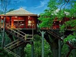 tree house resort. Rangerwood Nature Castle Machan Tree House In Thekkady Resort