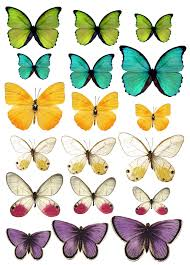 Butterfly Patterns Printable New Decorating Ideas