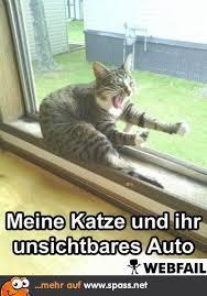 Group Of Lustige Katzen Katzenbilder Und
