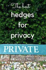 How to choose and grow hedges for privacy in middlesized gardens. How high  should it