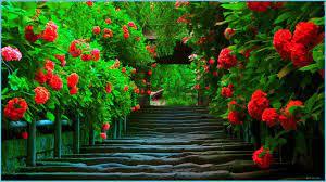 Beauty Love Nature Wallpaper ...