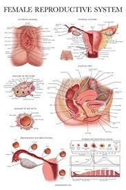 Woman Anatomy Chart