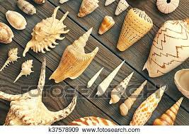 Seashell Collection Stock Photo K37578909 Fotosearch