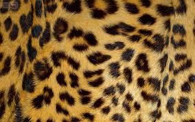 silk printed non woven wallpaper panther pink origin luxury vine background leopard