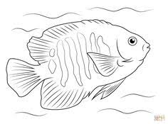 Small Picture Tropical Fish Coloring Page Crafty Pinterest Tropical fish