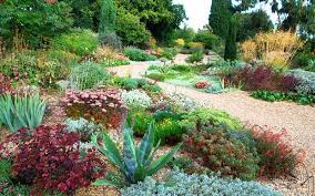 Small Picture Simply stylish The Beth Chatto Gardens Gravel garden Gardens