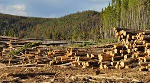 essay on deforestation in english for students words pdf essay on deforestation