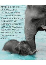 Pin by Polly Mills on Animals | Elephant quotes, Elephant facts, Elephant