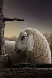 Pin by Sonja Richards on spinning wool | Animals beautiful, Sheep, Animals