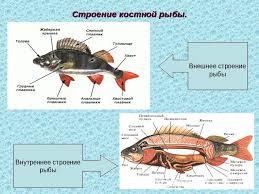 Тест по биологии класс на тему Контрольный тест по теме  Тест по биологии 7 класс классы рыб