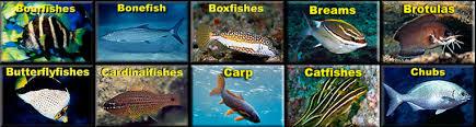 Oahu Fish Chart Fishes Index