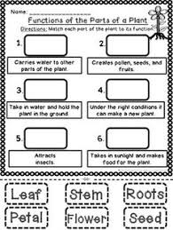 Small Picture functions of the plant parts worksheet for children Buscar con