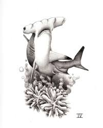 hammerhead shark tattoo drawing. Modren Shark Pin By Katelyn Beadle On Art  Pinterest Shark Tattoos Tattoos And Hammerhead  Shark Tattoo With Tattoo Drawing