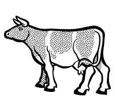 Drawing Cow Beef Cattle Picture 2301815 Drawing Cow Beef Cattle