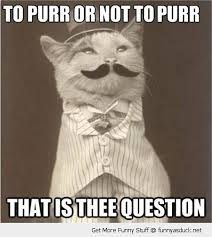 Like A Sir Cat | Funny As Duck | Funny Pictures via Relatably.com