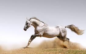 Animals Wallpaper Horses Horses Dust Sand Hd