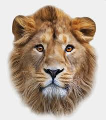 realistic lion face drawing. Beautiful Drawing Realistic Lion Head Design Vector To Realistic Lion Face Drawing R