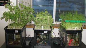 fish tank aquaponics system for the proper garden ever consider