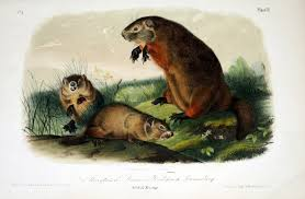 biodiversity heritage library book of the week happy groundhog day while combing through our collection looking for groundhogs we came across this marvelous book entitled the quadrupeds of north america v 1 1851
