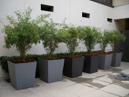 articles with large tree planters pots tag large tree pot photo