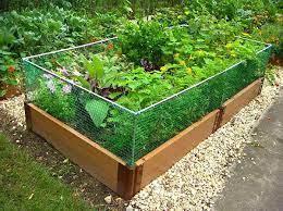 raised garden bed rabbit fence