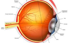 Eye Probability Chart How Genetics Determine Eye Color