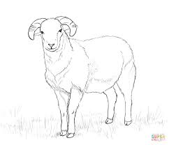 Small Picture Domestic sheep coloring pages Free Coloring Pages