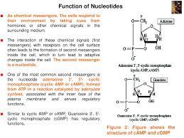 Nucleic Acid Structure Powerpoint Slides