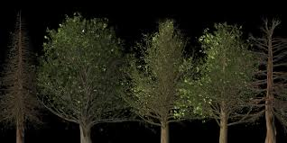 Light Tree Ppt Free Trees For Powerpoint Download Free Powerpoint