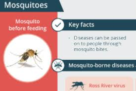 Insect Bites And Stings Healthdirect