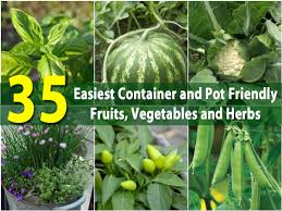 container garden vegetables. The 35 Easiest Container And Pot Friendly Fruits, Vegetables Herbs - DIY \u0026 Crafts Garden E