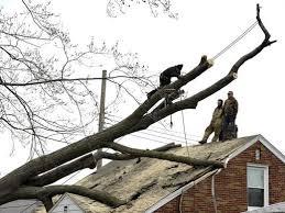 tree wiring diagram pontiac mi tree image wiring around 1 million lost power as winds pummeled region on tree wiring diagram pontiac mi